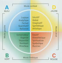Préférences cérébrales HERRMANN HDBI