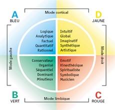 Formation à la méthode HERRMANN ® (HBDI) Préférences Cérébrales